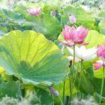 広島のお盆の期間はいつからいつまで?吉舎ふれあい祭り花火日程