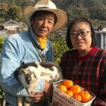 下蒲刈島で紅みかんと瀬戸内レモン栽培!ミニヤギと触れ合える農園【人生の楽園】