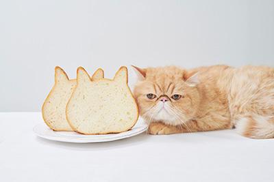 【開店】ねこねこ食パン・チーズケーキが ゆめタウン広島店にオープン