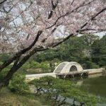 縮景園夜桜ライトアップ特別開園4月4日迄!駐車場・アクセス案内